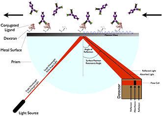 Surface plasmon resonance - Surface plasmon resonance (SPR).