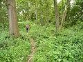 Sussex Border Path - geograph.org.uk - 843455.jpg