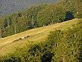 Svydovec, Tempa, koně.jpg