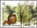 Sweet Chestnut (Castanea sativa).jpg