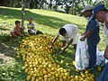 Tambo naranja.jpg
