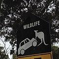 Tasmania road sign.jpg