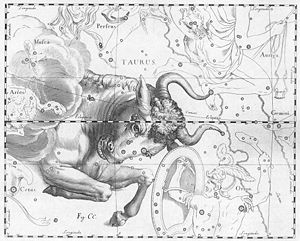 Gugalanna - Illustration of the constellation Taurus from Uranographia by Johannes Hevelius, 1690