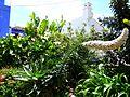 Teneriffa – Mercedeswald - Las Carboneras - panoramio (1).jpg