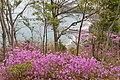 Teshima Art Museum (8808158244).jpg
