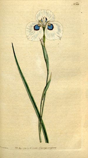 Peninsula Shale Renosterveld - Image: The Botanical Magazine, Plate 168 (Volume 5, 1792)
