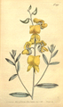 The Botanical Magazine, Plate 490 (Volume 14, 1800).png