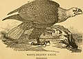The birds of Canada - with descriptions of their habits, food, nests, eggs, times of arrival and departure (1871) (14772324853).jpg