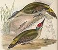 The birds of Europe (1837) (14565356679).jpg