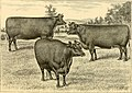 The breeds of live stock, and the principles of heredity (1887) (14594533670).jpg