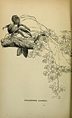 The orchid-grower's manual - containing descriptions of the best species and varieties of orchidaceous plants (1885) (14584142560).jpg