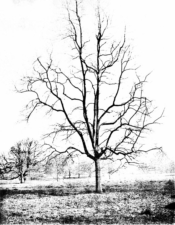 file the trees of great britain and ireland 1906 20593719620 Amazing Landscapes other resolutions 186 240 pixels 372 480 pixels
