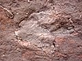 Theropod dinosaur footprint in sandstone (Kayenta Formation or Navajo Sandstone, Lower Jurassic; Potash-Poison Spider dinosaur tracksite, Williams Bottom, west of Moab, Utah, USA) 41 (33150115156).jpg