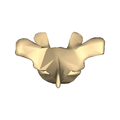 Thoracic vertebra 3 close-up posterior surface.png