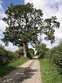 Thorny Lane - geograph.org.uk - 541298.jpg