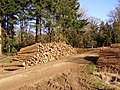 Timber stack in Roe Inclosure, New Forest - geograph.org.uk - 330594.jpg