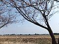 Toideichinose, Takaoka, Toyama Prefecture 939-1101, Japan - panoramio (6).jpg