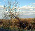 Toppled telegraph pole - geograph.org.uk - 1103672.jpg