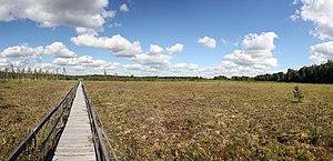 Polesie National Park - Image: Torfowisko moszne vongrzanka