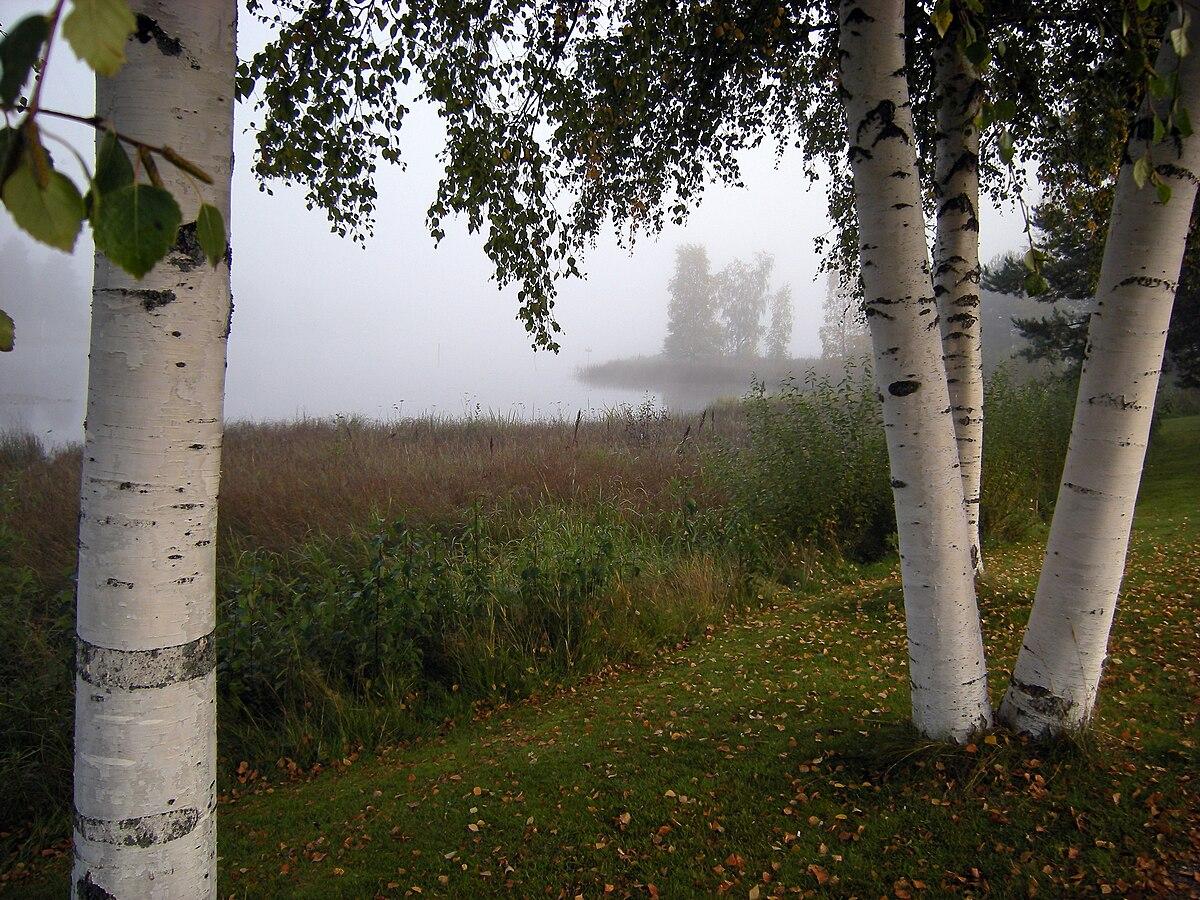 Träd u2013 Wikipedia