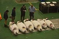Toyosu fish market-4b.jpg