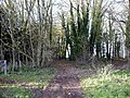 Track junction in small wood west of Crawley Down - geograph.org.uk - 302137.jpg