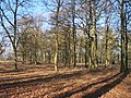 Tranquillity of a Copse in January Sunshine - geograph.org.uk - 113270.jpg