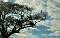 Tree (3465268346).jpg