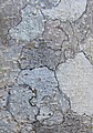 Tree bark (5848881757).jpg