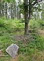 Tremsin, forest (3).jpg