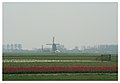 Tulip Fields - panoramio.jpg