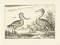 Twee waadvogels in een rivierlandschap.jpeg