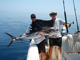 Two men holding a freshly caught sailfish.jpg