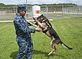 US Navy 101006-N-5539C-004 Master-at-Arms 3rd Class Daniel Padilla and Master-at-Arms 2nd Class Brit E295.jpg