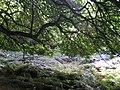 Underneath the spreading chestnut tree - geograph.org.uk - 230569.jpg