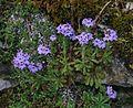 Unid. flower - Flickr - S. Rae (3).jpg
