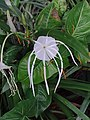 Unidentified flower 2.jpg