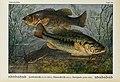 Unsere Süßwasserfische (Tafel 10) (6102597325).jpg