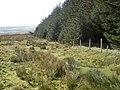 Upper edge of Pantmaenog Forest - geograph.org.uk - 1000992.jpg