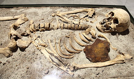 800-year-old skeleton found in Bulgaria stabbed through the chest with an iron rod. Vampire skeleton of Sozopol in Sofia PD 2012 06.JPG