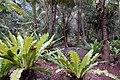 Vanilla plantation, Mucaweng, Lifou, New Caledonia, 2007 (2).JPG