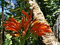 Vanille nature park Mauritius 2019-09-30 8.jpg