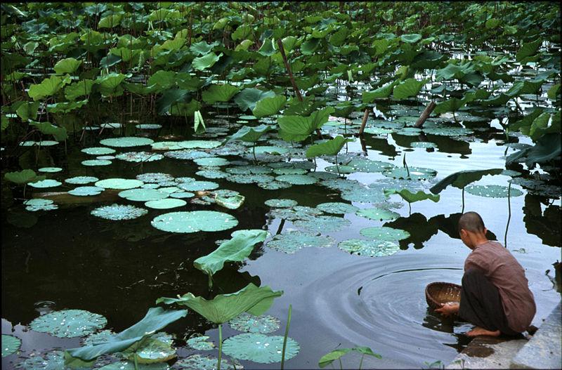Tập tin:Vietnam008a.jpg