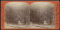 View in the Cauterskill Clove, near Mason's, by J. Loeffler.png