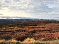 Views near the Arctic Circle - tundra, Richardson Mountains on the horizon (48681115617).jpg