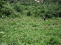 Villagers working in the field.JPG
