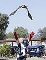 Visita al Centro de Recuperación de Animales Silvestres (CRAS) en su séptimo aniversario - 35971809010.jpg