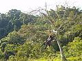 Vista de la vida tranquila desde el árbol.JPG