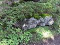 Vylet k Cernemu jezeru Sumava - 9.srpna 2010 166.JPG
