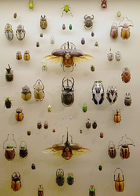 WLA vanda Collection of Beetles.jpg